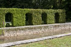 Hedge forming archways. A formal manicured hedge trained and cut to form stock photography
