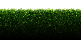 Hedge Stock Images