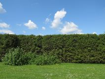Hedge Royalty Free Stock Images