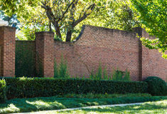 Hedge and Ivy on Old Brick Wall. A large brick wall with ivy and green hedge Royalty Free Stock Images