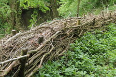 Hedge Laying. Royalty Free Stock Photos