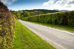 Hedge Lined Road Royalty Free Stock Images