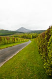 Hedge lined road with goatfell Stock Images