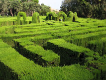Hedge maze. Maze made of hedges in Barcelona, Spain Royalty Free Stock Photos