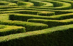 Hedge maze. Complex ornamental garden hedge maze Stock Photos