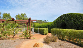 Hedge Maze and Arbor: Amaze'n Margaret River. MARGARET RIVER,WA,AUSTRALIA-JANUARY 16,2016: Hedge maze entrance and arbor at the Amaze'n Margaret River botanical Royalty Free Stock Photo