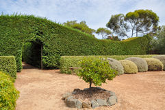 Hedge Maze with Botanical Gardens. MARGARET RIVER,WA,AUSTRALIA-JANUARY 16,2016: Hedge maze exit at the Amaze'n Margaret River with manicured botanical gardens in Stock Images