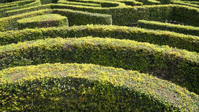 Hedge Maze. A complex ornamental garden hedge maze Royalty Free Stock Images