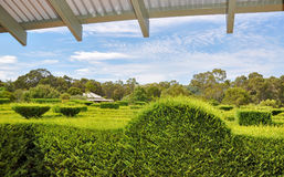 Hedge Maze: Elevated View. MARGARET RIVER,WA,AUSTRALIA-JANUARY 16,2016: Elevated view of hedge maze from overlook at the Amaze'n Margaret River botanical gardens Royalty Free Stock Photography