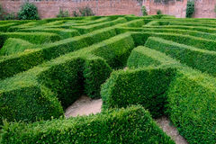 A hedge maze. Geometric pattern of a hedge maze Royalty Free Stock Images