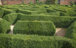 Hedge maze. Looking down at small section of a maze Stock Photography
