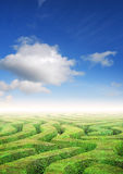 Hedge maze problem solving. Hedge maze under a summers sky, problem solving concept Royalty Free Stock Images