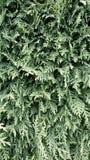 Hedge Royalty Free Stock Image