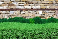 Hedge over wall Royalty Free Stock Images