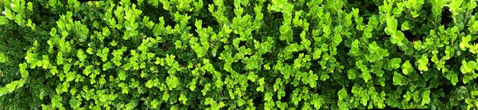 Hedge stock image