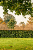 Hedge in a park Royalty Free Stock Images