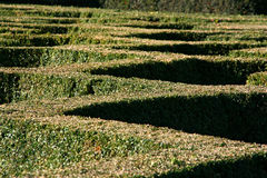 Hedge Pattern Stock Images