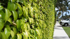 Hedge protector Stock Image