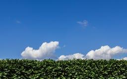 Hedge pruned Stock Photos