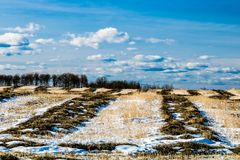 Farmers field, cowboy Trail, Alberta, Canada. Hedge rows poking up through the snow as winter still hangs on Royalty Free Stock Photo