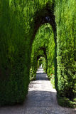Hedge's tunnel Royalty Free Stock Image