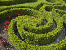 Hedge shaped skilful Royalty Free Stock Photo