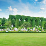 Hedge in a summer park Royalty Free Stock Photos