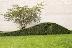 Hedge with tree Royalty Free Stock Photo