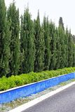 Hedge trees Royalty Free Stock Images