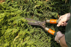 Hedge Trimming Royalty Free Stock Photos
