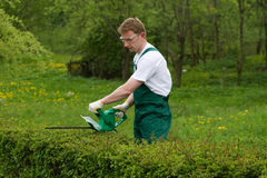 Hedge Trimming. Gardener is trimming the hedge Royalty Free Stock Photos