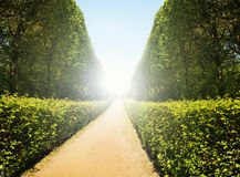 Hedge - tunnel with walkway in an old park Royalty Free Stock Photos