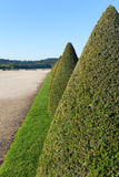 Hedge in Versailles, France. Stock Image