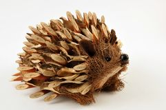 Hedgehod Royalty Free Stock Image
