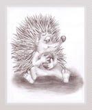 hedgehog шарика Стоковое Изображение RF
