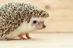 Free Hedgehog Stock Photo - 138170380