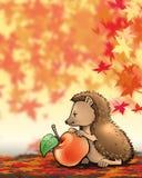hedgehog Стоковые Изображения RF