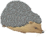 Hedgehog Foto de Stock Royalty Free