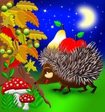 Hedgehog. Found some fruit and mushroom Royalty Free Stock Photo