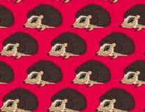 hedgehog Stock Afbeeldingen