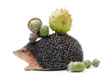 Hedgehog with acorns and chestnuts Stock Images