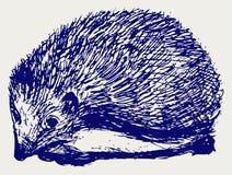 Hedgehog animal vector illustration