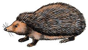 Hedgehog animal Royalty Free Stock Images