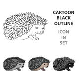 Hedgehog.Animals single icon in cartoon style vector symbol stock illustration web. Hedgehog.Animals single icon in cartoon style vector symbol stock Royalty Free Stock Photography