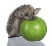 Hedgehog and apple Stock Image