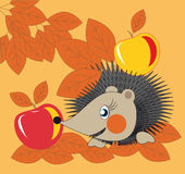 Hedgehog and apples. Little hedgehog gathering apples in the fall garden Stock Images