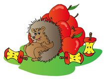 Hedgehog with apples Stock Photography