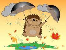 Hedgehog autumn Stock Photography