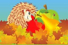 Hedgehog autumn. Autumn composition with hedgehog and fruit Stock Photos