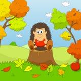 Hedgehog autumn Stock Photo